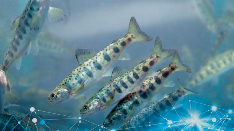 Fish_digital